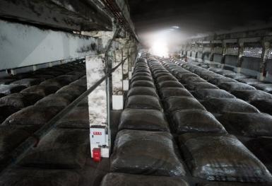 亿博国际备用老窖池群